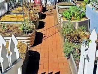 DIY Garden Path Ideas and Build (+ Why I Started Epic Garden...