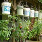 Grow Tomato Plants Upside Down - Better Tomatoes