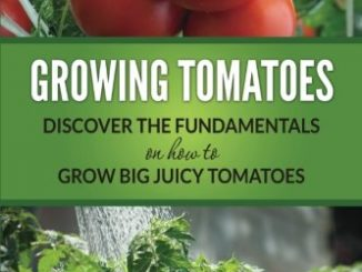 Growing Tomatoes: Discover The Fundamentals On How To Grow B...
