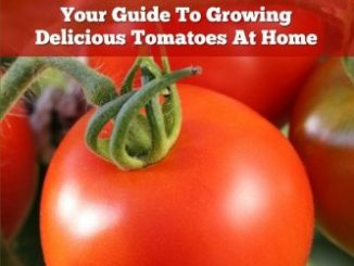 Growing Tomatoes - Your Guide To Growing Delicious Tomatoes ...