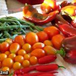 Garden HARVEST September UPDATE Hurricane Florence prep cont…