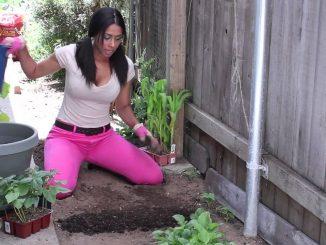 Winter Soil Preparation for Vegetable Gardening : The Chef's...