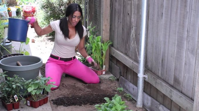 Winter Soil Preparation for Vegetable Gardening : The Chef's...
