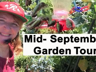 Garden Tour Mid-September Container Gardening & Woodchips Sq...