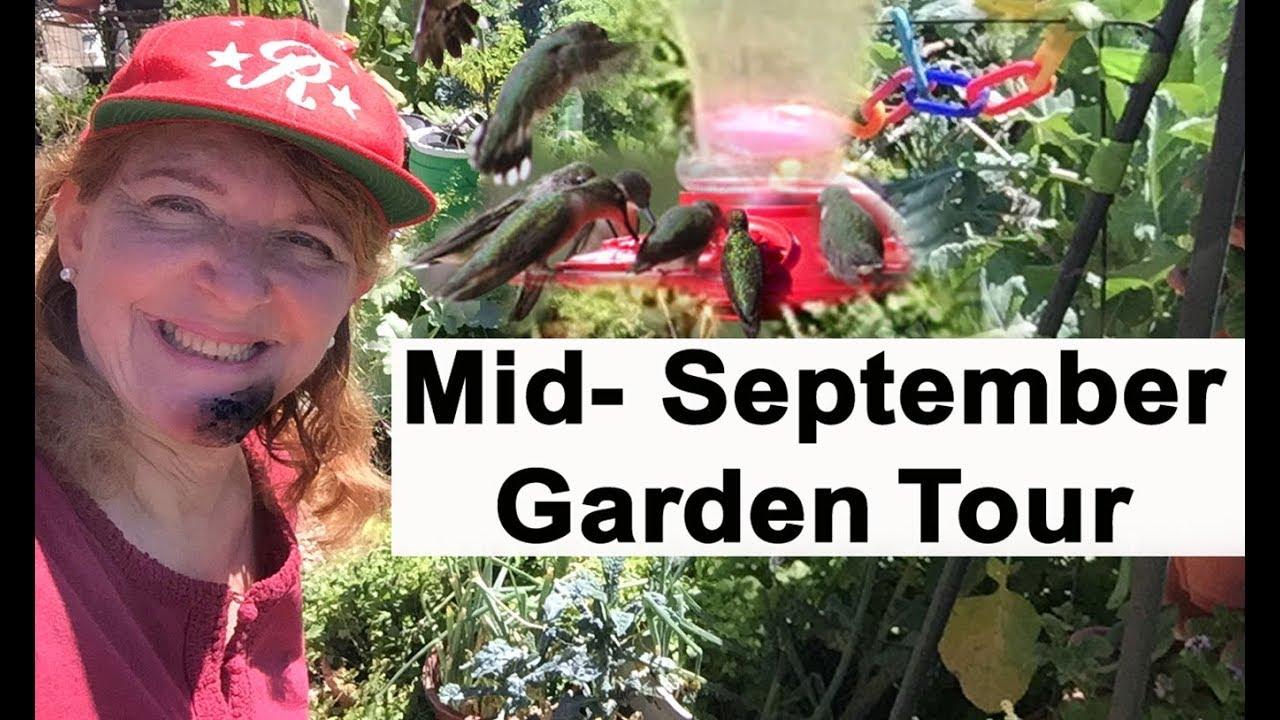 Garden Tour Mid-September Container Gardening & Woodchips Sq…