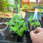 A Complete Guide for Growing Tomatoes & Peppers - Seed to Ha...
