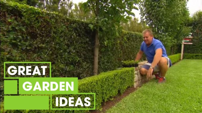 Tips & Tricks For Perfect Hedging | Gardening | Great Home I...