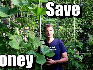 5 Money Saving Tips for Beginning Gardeners (Frugal Gardenin...