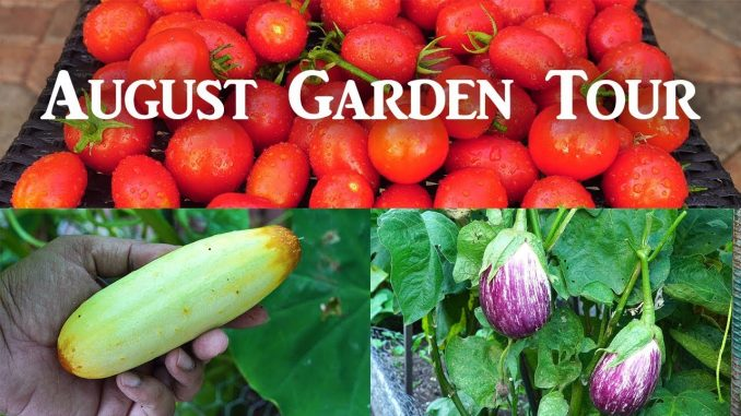 California Garden - Aug 2018 - Gardening Tips, Harvests & Mu...