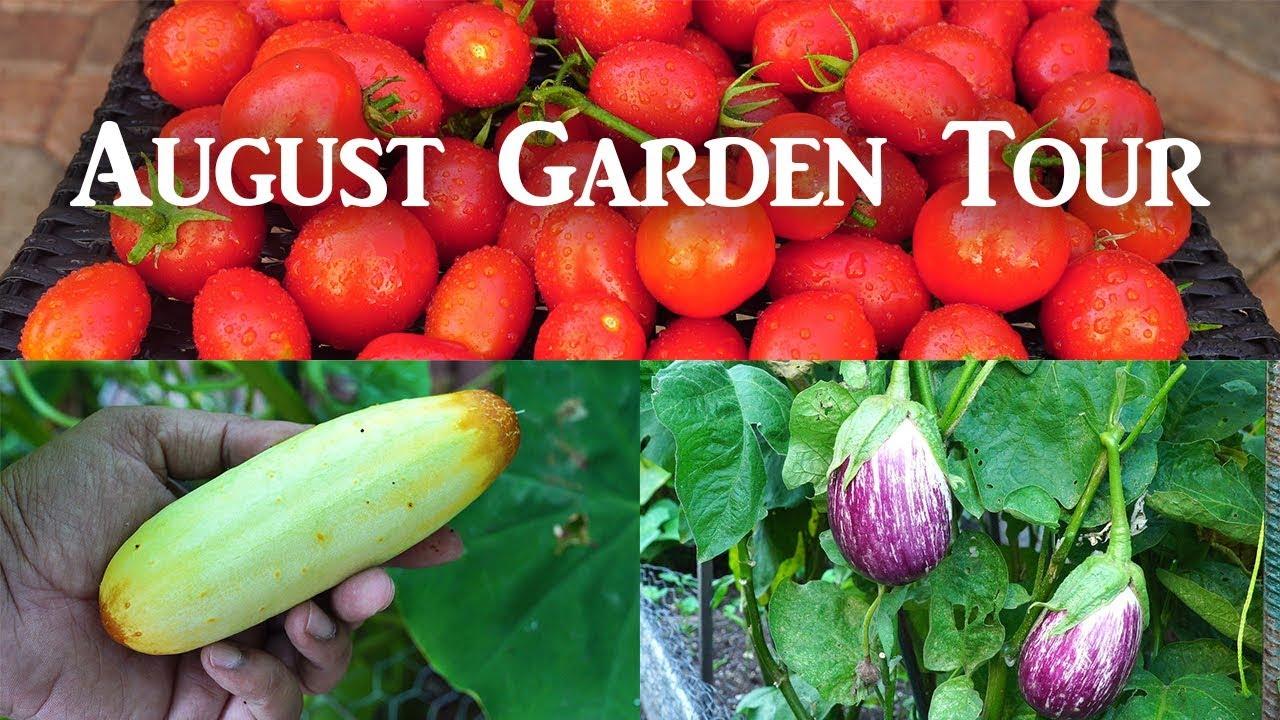 California Garden – Aug 2018 – Gardening Tips, Harvests & Mu…