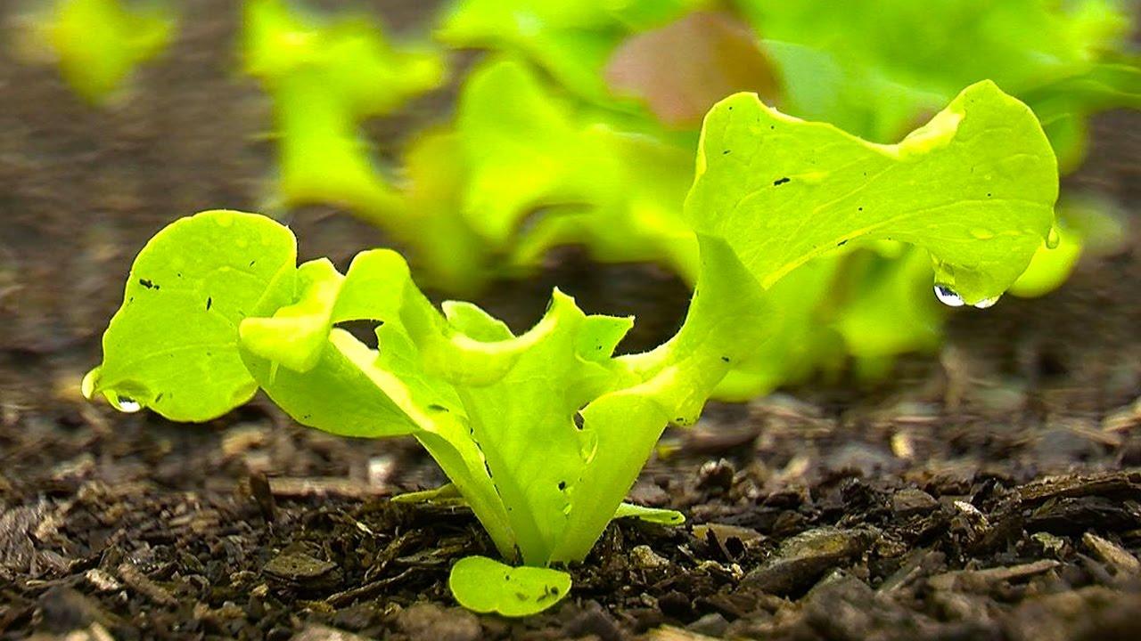 How to Grow a Vegetable Garden – Back To Eden Organic Garden…