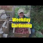Gardening on a Week-day